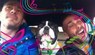 """Perro bulldog """"canta"""" junto a su dueño y causa sensación en las redes sociales"""