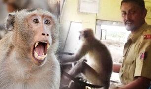 India: un mono fue captado manejando autobús ante la atónita mirada de los pasajeros
