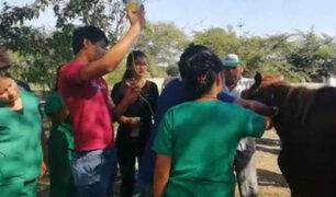 Chiclayo: caballos de paso abandonados son asistidos por estudiantes y vecinos