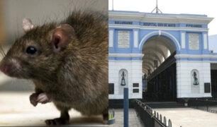 Pacientes del Hospital Dos de Mayo denuncian presencia de ratas