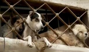 Callao: piden ayuda para mascotas abandonadas y encerradas en casa