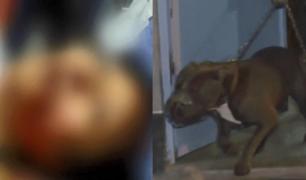 Mujer desfigurada por perros aún no recibe ayuda por parte de dueño de animales