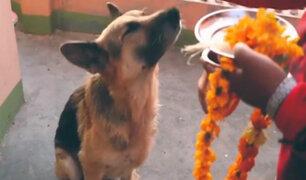 """Nepal celebra el festival """"Tihar"""" dedicado a los perros"""