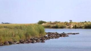 Botsuana: 400 búfalos aparecieron ahogados en río Chobe