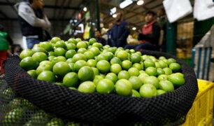 Limón bajó de precio: el kilo se vende desde S/1.50 en Mercado Mayorista de Lima