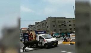 La Victoria: toro suelto embistió a peatones y vehículos