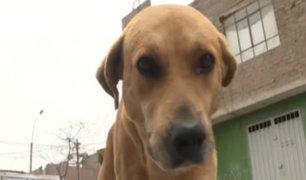 Ate: escolares rindieron homenaje a 'Gringo', el perro héroe