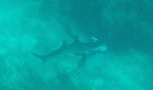Mire el preciso instante en el que un tiburón muerde la cabeza a buzo en Bahamas