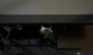 Lanzan una bolsa con roedores en el Congreso de Colombia