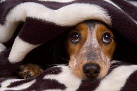 Consejos para proteger a tu mascota de los pirotécnicos