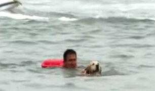 Costa Verde: perro salvavidas ayudará en labores de rescate en playas