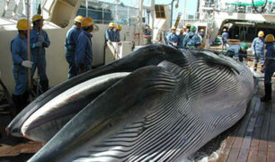 Japón retomará la caza comercial de ballenas en julio