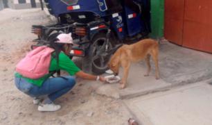 Navidad 2018: jornada animalista llevó comida a perros y gatos de la calle