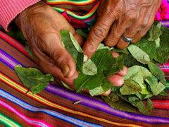 """Pedro Castillo: """"En los sueños de mi gobierno está industrializar la hoja de coca"""""""