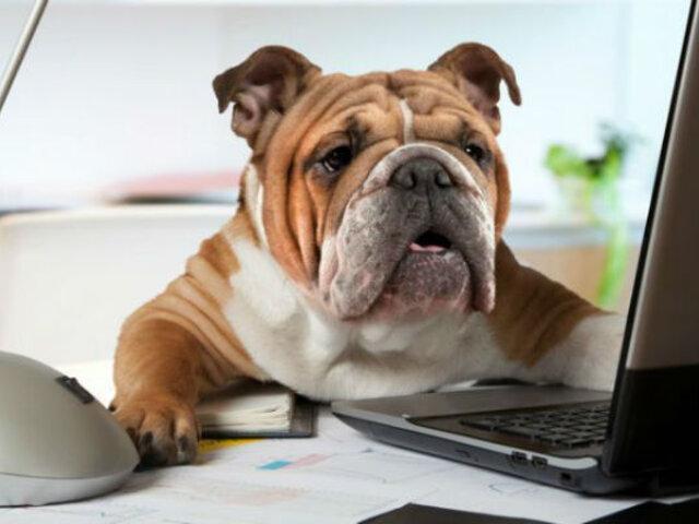 Tener mascotas en el trabajo no solo puede reducir tu estrés, sino hacerte más productivo