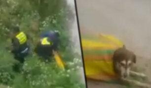Cusco: serenos rescatan a perro que fue lanzado a río dentro de un costal
