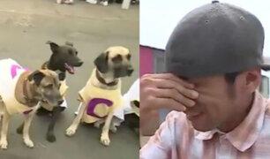 SMP: envenenan a nueve perros que participaron en la bienvenida al Papa