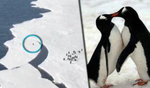 Este fue el tenso momento vivido por un pingüino para salvar su vida