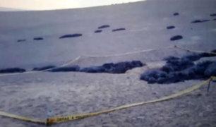 Tacna: Hallan cuerpo de comerciante desaparecida enterrado en descampado