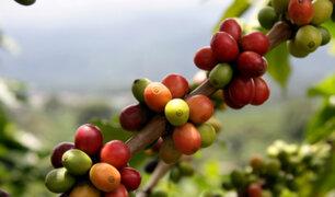 El 60% de las variedades de café están en peligro de extinción