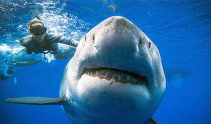Deep Blue: registran en video al tiburón blanco más grande del mundo