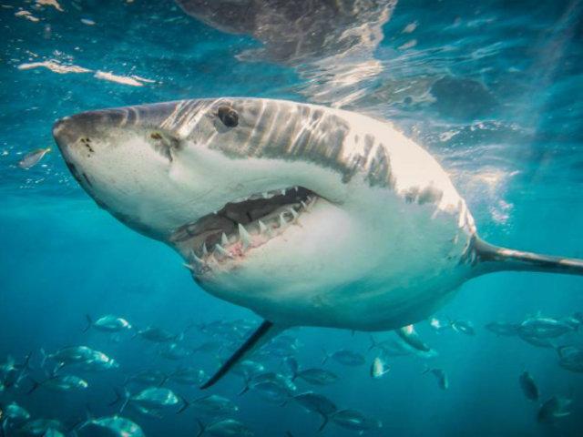 Australia: avistamiento de tiburones provocó cierre de playas