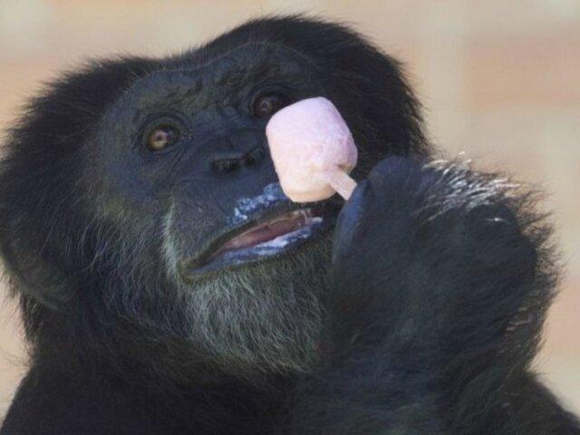 Brasil: zoológico alimenta a sus animales con helados