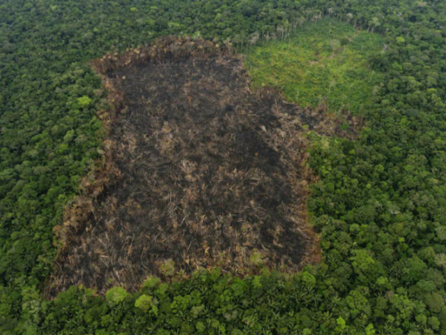 Minería ilegal rompe récord histórico de deforestación en la Amazonía peruana