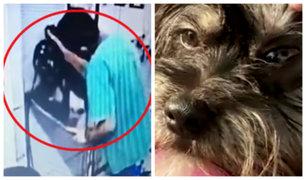 Surquillo: denuncian a veterinaria por agresión a perrita de 1 año