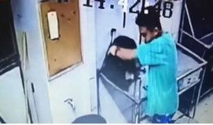 Surquillo: denuncian a trabajadores de veterinaria que maltrataron salvajemente a animal
