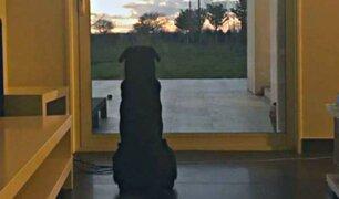 Emiliano Sala: mascota del futbolista aún espera su regreso
