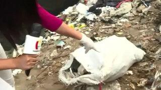 Pucusana: Hasta restos de animales contaminan playa de Lima