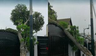 Barranco: árbol cae sobre fachada de residencia de embajador de España