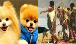 Estudio revela que el hombre Neolítico ya trataba al perro como su mejor amigo