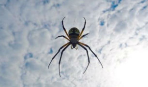 Aumentan casos de zancudos y arañas en Lima por altas temperaturas en verano