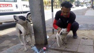 El conmovedor rescate de un cachorro gravemente herido [FOTOS]