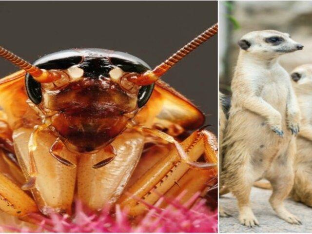 San Valentín: zoológico ofrece poner el nombre de tu ex a una cucaracha