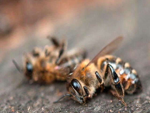 Los insectos están desapareciendo del planeta en tiempo récord