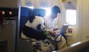 FOTOS: 16 cosas insólitas y extrañas ocurridas durante un viaje en avión