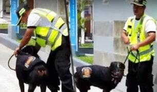 Denuncian maltrato a perro de la brigada canina de la Municipalidad de Chorrillos