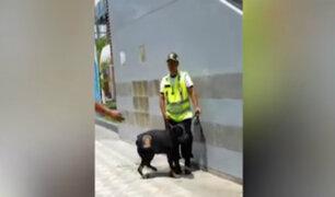 Chorrillos: despiden a sereno que maltrató a perro