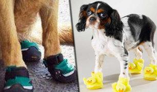 Conozca los beneficios y usos de los zapatos para perros