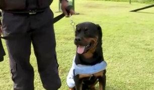 "San Isidro: protegen a perros con ""chalecos refrigerantes"" ante intenso calor"