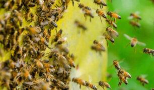 Yurimaguas: alumnos y profesores fueron picados por enjambe de abejas