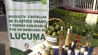 Pachacámac nos invita a disfrutar nuevamente del 'Festival de la lúcuma'