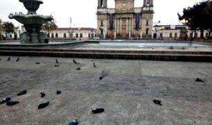 Cientos de palomas fueron envenenadas en Plaza de la Constitución