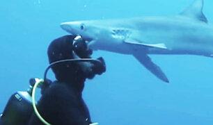 """Sudáfrica: tiburón le da un """"beso"""" a un buzo en el océano"""