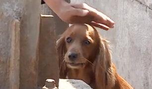 Callao: policías rescatan a perrita perdida en acantilado de La Costanera