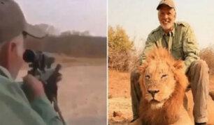 Zimbabue: indignación por cazador que mató a un león mientras dormía