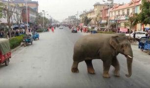 Elefante salvaje causa daños en el centro de una ciudad en China